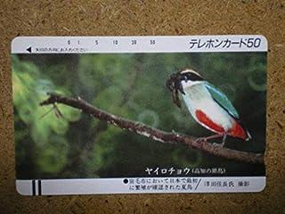 doub330-5771 高知 県鳥 ヤイロチョウ テレカ