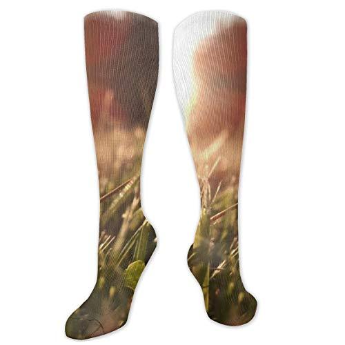 Compressiesokken voor mannen en vrouwen - het beste voor hardlopen, atletische sporten, spataderen, Travel-Nature Grass Lens Flare Sunlight Macro