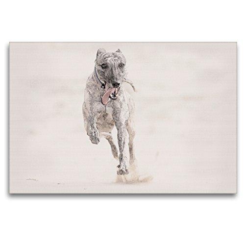 Premium Textil-Leinwand 120 x 80 cm Quer-Format Ein Bild aus dem Kalender Whippets 2017 | Wandbild, HD-Bild auf Keilrahmen, Fertigbild auf hochwertigem Vlies, Leinwanddruck von Andrea Redecker