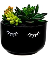 Holby Goods Artificial Succulent Plants Fake Cactus Potter in Large Decorative Pot