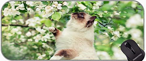 Escritorio Completo XXL Juego extendido Alfombrilla De Ratón, Ojos Azules Himalayan Cat Animal Flor Profesional Mousepad, Bordes cosidos