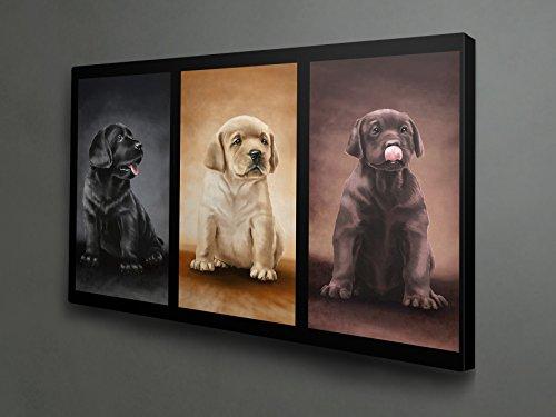 Labrador retriever all colors print on canvas