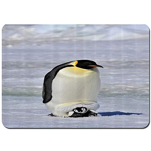 Wdoci Alfombrilla de baño.Antideslizante,Pingüino Emperador con Bebé Nieve Antártida Polo Norte Fauna Silvestre Naturaleza Fauna Alfombra de Ducha(75cmx45cm)