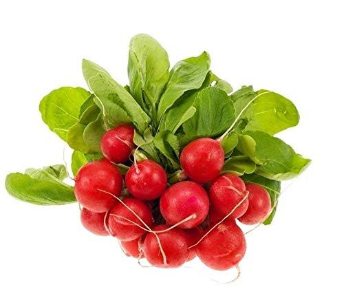Gemüsesamen Kirschrettichfrucht Rettich Weißrettichsamen Herbstsaat Hochertrag Chinakohl Gelbherz Babygemüse 300g