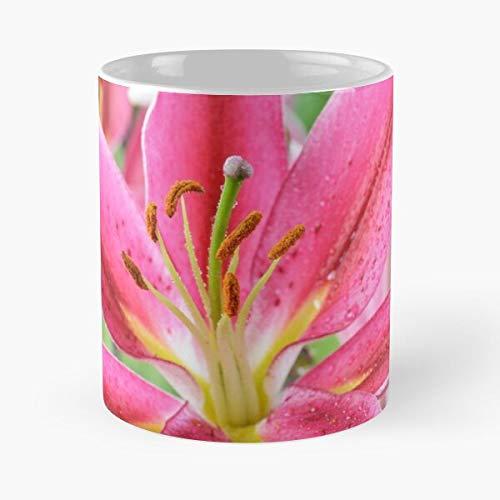 worldbrand Liliums Lilium Hybrid Oriental Lily Flowers Joop Lilies Best 11 oz Kaffeebecher - Nespresso Tassen Kaffee Motive