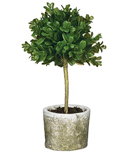 Sullivans Mini Boxwood Topiary