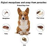 IMG-2 laoye collare antiparassitario cane antipulci