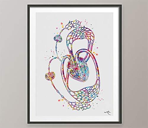 Impresión de acuarela de circulación linfática, arte méd