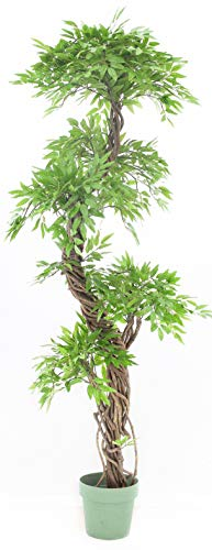 Eastern Style Topiary Tree, Lifelike Artificial Leaves with Real Bark Approx 6 feet Tall