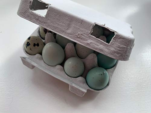 Quail egg boxes for 12 eggs - Pack of 20 carton biodegradable recycled pulp boxes