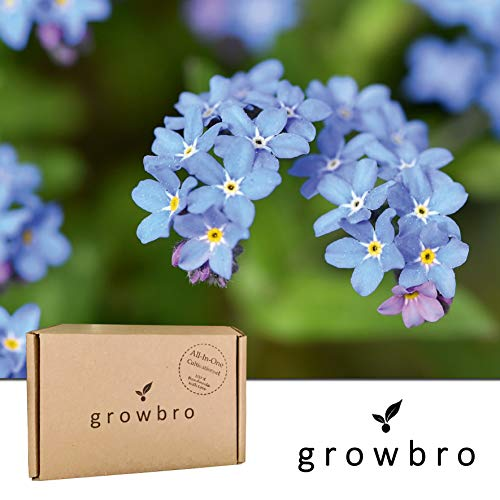 growbro VergissMeinNicht Anzuchtset, Züchte Dein eigenes Liebessymbol, Geschenke für Beste Freundin, Geschenkideen für Frauen, Hochzeitstag, UVM.