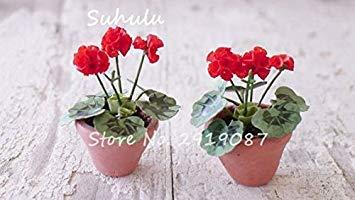 Vistaric 100pcs Rare Mini Geranium Graines Vivaces Belles Fleurs Graines Pelargonium Peltatum Graines disponibles bonsaï mélange en pot couleurs 5