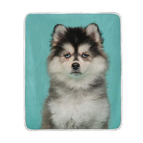My Daily Pomsky - Manta de microfibra para perro, diseño de cachorro (127 x 152 cm)