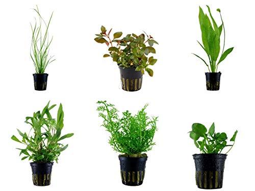 Tropica Hintergrund Set mit 6 Topf Pflanzen Aquariumpflanzenset Nr.25 Wasserpflanzen Aquarium Aquariumpflanzen