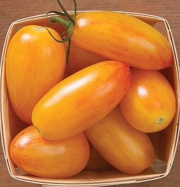 100 pcs/paquet Précipité nouvelles Plantes d'extérieur Promotion Jardin semences de tomates en pot fruits Bonsai Balcon de semences de légumes 16