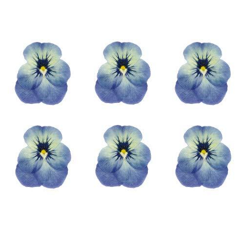 食べられる押し花 ドライエディブルフラワー ビオラ(水色) 50枚入り 食用花 ドライフラワー 有限会社トム(omtmb6268)
