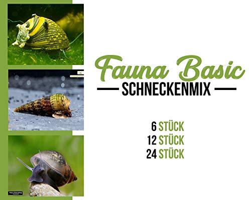 Garnelen Schnecken Mix - Fauna Basic - Aquarium Schnecken - Bodenpflege Trupp, Menge:6 STK.