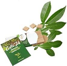 Natural Mayan Chewing Gum