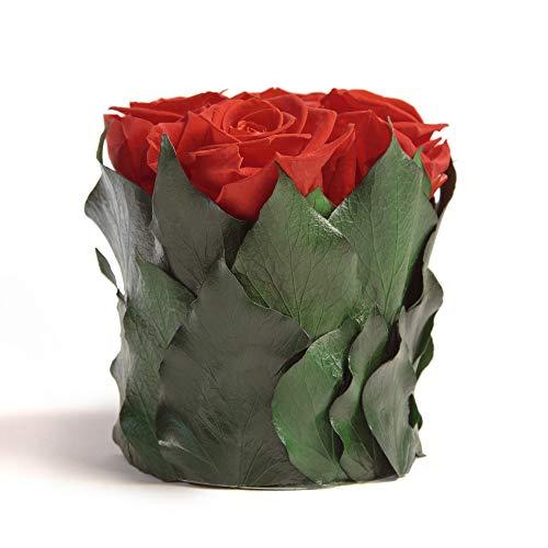 ROSEMARIE SCHULZ Heidelberg Prawdziwy bukiet kwiatów z 4 czerwonymi różami w kolorze czerwonego w kubeczku z zakonserwowanych liści bluszczu i trwały bukiet kwiatowy