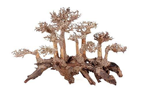 Aquarium Wurzel Bonsai Exclusiv Größe M 40x30cm Nr.115 Holz Deko Aquascaping Bonsaibaum Dekoration Landschaft Moos Echtholz Natur