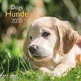 Hunde - Broschurkalender - Kalender 2020 - teNeues-Verlag - Art & Image - Wandkalender mit Poster und Platz für Eintragungen - 30 cm x 30 cm (offen 30 cm x 60 cm)