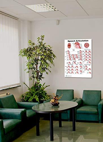 Speech Articulation Anatomy Poster 24x36inch, Speech Language Pathology - Vowels-fricative Consonants-diphthongs