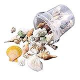 LAOLEE Estrellas de mar Conchas de mar Caracol Coral en partido al azar adornos de tanque de peces Decoración de acuario Decoración de fiesta temática DIY Artesanías bolsa de conchas marinas mixtas
