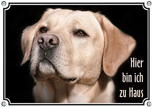 Hundeschild mit Labrador Retriever - hochwertiges Metallschild - uv-beständig, DIN A5
