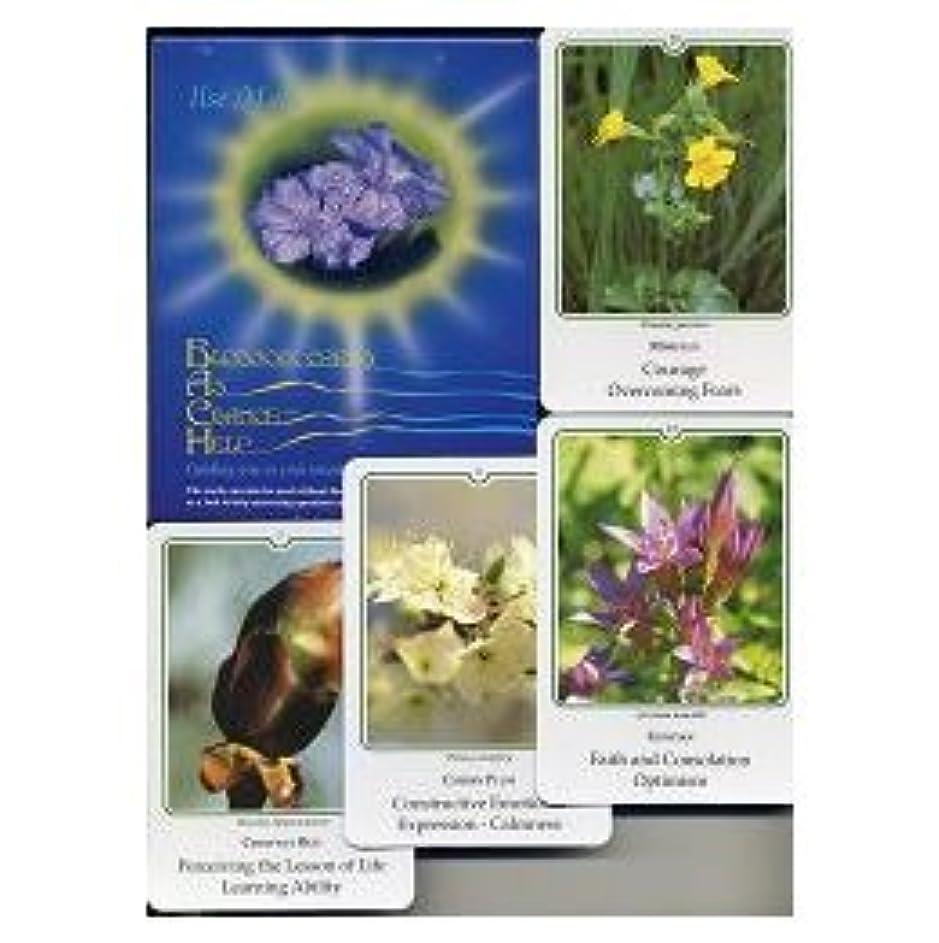 写真カードセット(38種)英語版