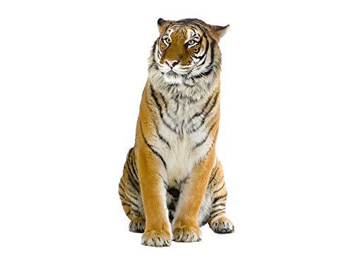 GRAZDesign Wandtattoo Tiger, Wandaufkleber Afrika Tattoo, Wohnzimmer Tiere Asien sitzend Raubkatze / 78x40cm