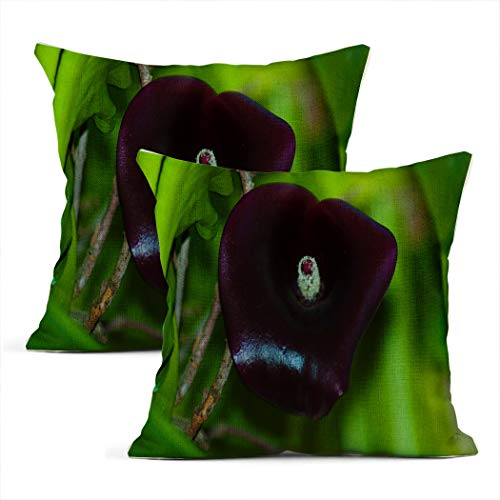 Zynii Pillowcase Dark Purple Calla Lily in Garden the Is Perfect Symbol of Grace Royal Bearing and Dignity Decorate Your Room and Living Room to Bring You Comfort as a Gift