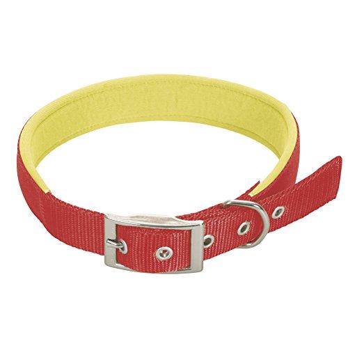 CHAPUIS SELLERIE Collier pour Chien Sangle Confort Nylon Rouge Largeur 25 mm, Longueur 55 cm, Taille L