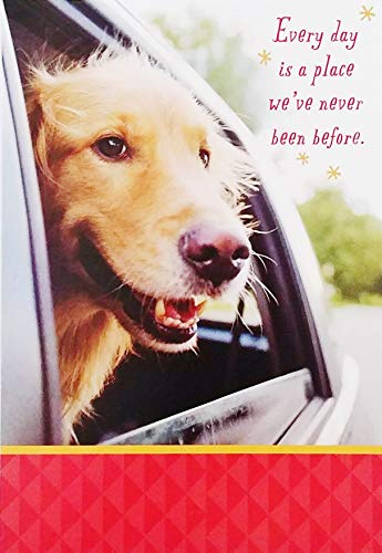 Hope today you enjoy looking back on all your achievements and looking forward to many new adventures! - Happy Birthday Greeting Card with Golden Retriever Labrador