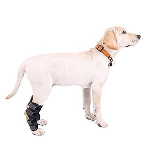 Genouillère pour chien,Speedy Pet Chien Hock Brack Idéal pour les chiens blessés Protecteur de patte d'arthrite avec sangles, disponible en petits chiens moyens Noire