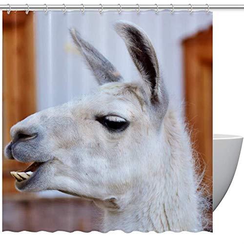 HEOEH Lustiger Lama Zahn Stoff Duschvorhang, wasserdicht Badezimmer Polyester Duschvorhang für Badewanne Duschen, 167,6 x 182,9 cm