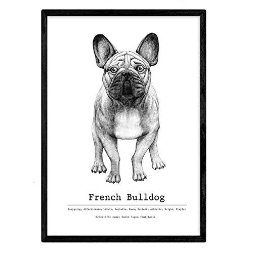 Nacnic Poster de Bulldog con texto. Lámina decorativa de perros. Tamaño A4