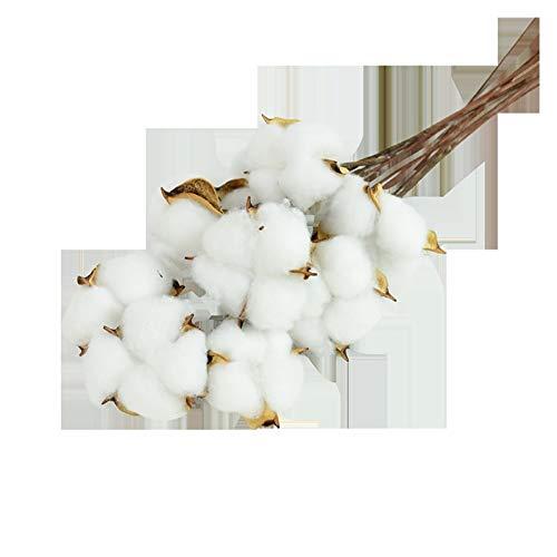 Getrocknete Blumen Natürlich getrocknete Baumwolle Blumen Weißes Zuhause Dekorative künstliche Blumenzweig Hochzeit Brautjungfer Blumenstrauß Dekor Gefälschte weiße Blume Blumen getrocknet strauß