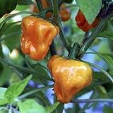 種子パッケージではありません植物:X専用ハバネロチリ野菜 - - - ハウス - B