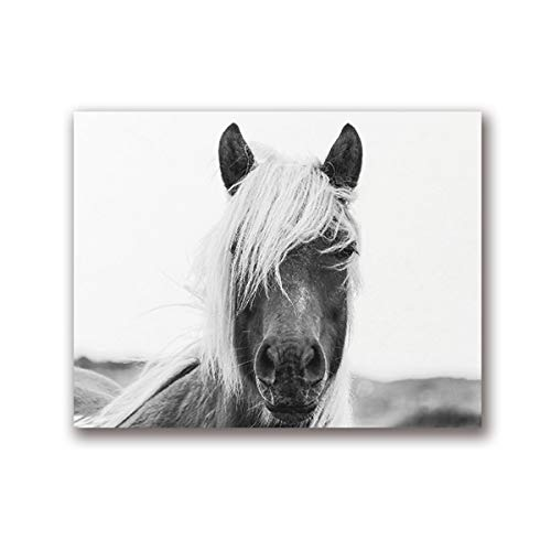 Black and White Horse Wall Art Animal Poster Modern Photography Horse Head Canvas 50x70cm