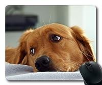 ゲーミングマウスパッド、ストップかわいい犬の犬のHD P、精密シーミング、耐久性のあるマウスパッド