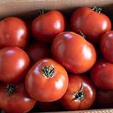 David's Garden Seeds Tomato Slicing Wisconsin 55 4422 (Red) 25 Non-GMO, Heirloom Seeds