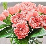 300PCS 16色がありますカーネーションの種多年生の花鉢植え園芸植物Caryophyllusフラワー種子20