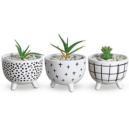 Carlton Lane Sofia - Pots for Succulent Plants - Set of 3 - Small Succulent Pots - Ceramic Pot White - Decor Planter Pot Set - Ideal Succulent Planters for Home, Office, Window Sill, Book Shelf