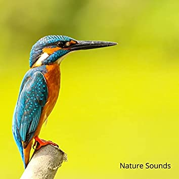 Nature: Bird Sounds, Forest Sounds, Sounds of Nature