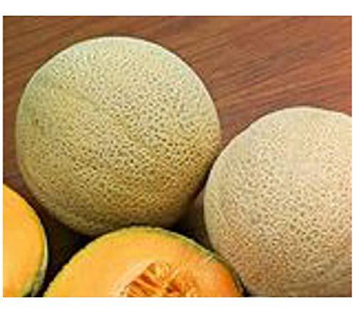 """Semi Premier diretti ORG070 organici """"Hales migliori Jumbo"""" semi di melone (confezione da 50)"""