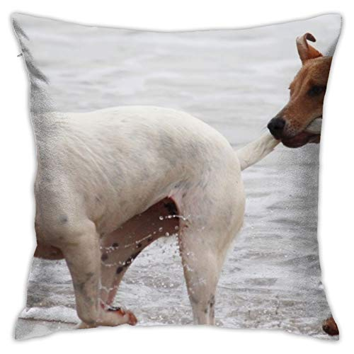 ewretery Throw Pillow Cover Dogs Batons Play Bite Romp Beach Pet Pull Tail Decorative Pillow Case Home Decor Square 18x18 Inches Pillowcase