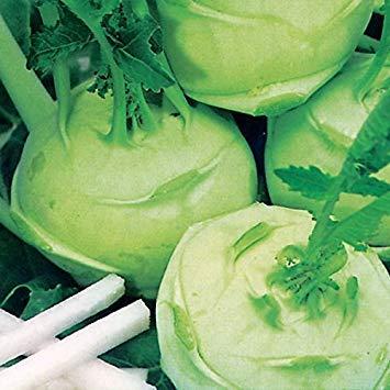 Shop Meeko Kings Seeds - Kohl Rabi vert Délicatesse - 500 graines