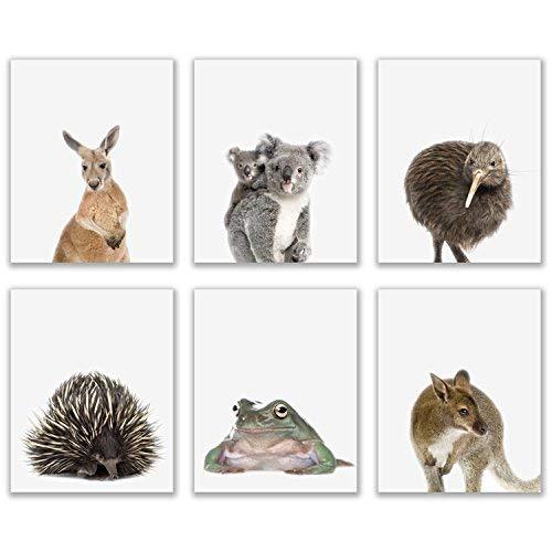 Crystal Baby Outback Animals Poster Prints - Set of 6 (8x10) Adorable Furry Australian Portraits Wall Art Nursery Decor - Red Kangaroo - Kiwi - Green Tree Frog - Echidna - Koala - Wallaby