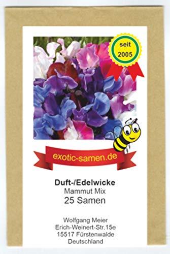 Duftwicke - Edelwicke - Bienenweide – Schnittblumen - Mammut Mix bis 180 cm - 25 Samen
