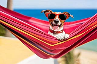 Funny Dog Wearing Red Sunglasses in a Hammock on the Beach 9019043 (9×12 Art Print,..